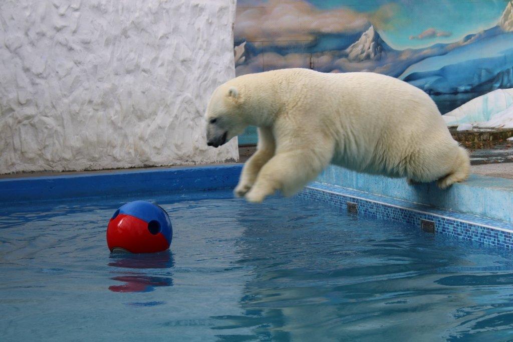 Пенза: Океанариум + Зоопарк 2020